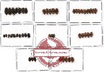 Scientific lot no. 13 Nitidulidae (48 pcs)