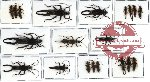 Scientific lot no. 13 Dermaptera (20 pcs A, A-, A2)
