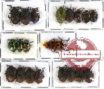 Scientific lot no. 143 Heteroptera (Pentatomidae) (20 pcs A-, A2)
