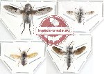 Scientific lot no. 2 Diptera (A2) (4 pcs)