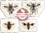 Scientific lot no. 3 Diptera (4 pcs) (spread)