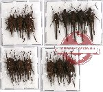 Scientific lot no. 12 Orthoptera (14 pcs A-, A2)