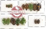 Scientific lot no. 152 Heteroptera (15 pcs A, A-, A2)