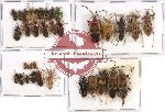 Scientific lot no. 153 Heteroptera (36 pcs A, A-, A2)