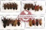Scientific lot no. 156 Heteroptera (20 pcs A, A-, A2)