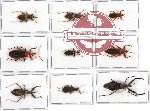 Scientific lot no. 164 Heteroptera (9 pcs - 2 pcs A2)