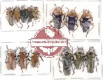 Scientific lot no. 7 Cantharidae (14 pcs)
