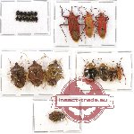 Scientific lot no. 192 Heteroptera (24 pcs A, A-, A2)