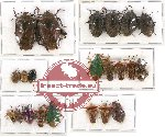 Scientific lot no. 189 Heteroptera (Pentatomidae) (21 pcs A-, A2)