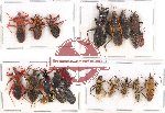 Scientific lot no. 183 Heteroptera (mainly Reduviidae) (23 pcs)