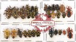 Scientific lot no. 289 Heteroptera (Pentatomidae) (31 pcs - 9 pcs A2)