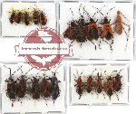 Scientific lot no. 280 Heteroptera (20 pcs A-, A2)
