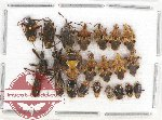 Scientific lot no. 292 Heteroptera (21 pcs)