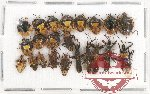 Scientific lot no. 291 Heteroptera (22 pcs)