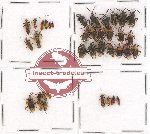 Scientific lot no. 219 Heteroptera (37 pcs A, A-, A2)