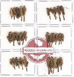 Scientific lot no. 14 Orthoptera (31 pcs A, A-, A2)