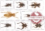 Scientific lot no. 15 Orthoptera (8 pcs A, A-, A2)