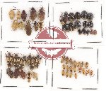 Scientific lot no. 211A Heteroptera (54 pcs A, A-, A2)