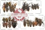 Scientific lot no. 287 Heteroptera (27 pcs A, A-, A2)