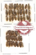 Scientific lot no. 284 Heteroptera (47 pcs)
