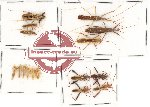 Scientific lot no. 212 Heteroptera (16 pcs A, A-, A2)