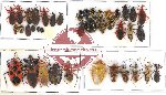 Scientific lot no. 299 Heteroptera (42 pcs A, A-, A2)