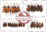 Scientific lot no. 281 Heteroptera (25 pcs A, A-, A2)