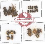 Scientific lot no. 227 Heteroptera (23 pcs A, A2)