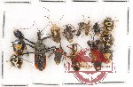 Scientific lot no. 246 Heteroptera (15 pcs)