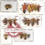 Scientific lot no. 247 Heteroptera (18 pcs A, A-, A2)