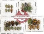 Scientific lot no. 294 Heteroptera (Pentatomidae) (29 pcs)