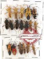 Scientific lot no. 238 Heteroptera (18 pcs)