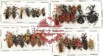 Scientific lot no. 286 Heteroptera (32 pcs A, A-, A2)