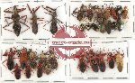 Scientific lot no. 254 Heteroptera (31 pcs A, A-, A2)