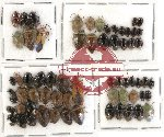 Scientific lot no. 282 Heteroptera (65 pcs)