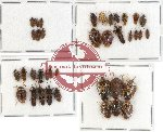 Scientific lot no. 274 Heteroptera (38 pcs A, A-, A2)