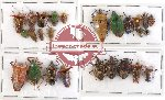 Scientific lot no. 255 Heteroptera (26 pcs)
