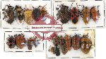 Scientific lot no. 298 Heteroptera (21 pcs A, A-, A2)