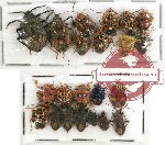 Scientific lot no. 314 Heteroptera (22 pcs A, A-, A2)