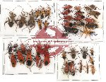 Scientific lot no. 2 Heteroptera (44 pcs)