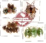 Scientific lot no. 8 Heteroptera (17 pcs)