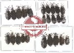 Scientific lot no. 13 (Araidae) (25 pcs)