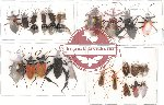 Scientific lot no. 14 Heteroptera (A2) (27 pcs)