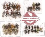 Scientific lot no. 15 Heteroptera ( some A2) (37 pcs)