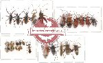 Scientific lot no. 19 Heteroptera (A2) (26 pcs)