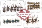 Scientific lot no. 20 Heteroptera (33 pcs)
