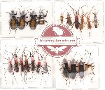 Scientific lot no. 22 Heteroptera (A2) (21 pcs)