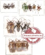 Scientific lot no. 23 Heteroptera (A2) (12 pcs)