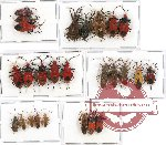 Scientific lot no. 200 Heteroptera (26 pcs A, A-, A2)