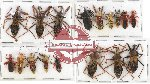 Scientific lot no. 325 Heteroptera (Reduviidae) (17 pcs A, A-, A2)